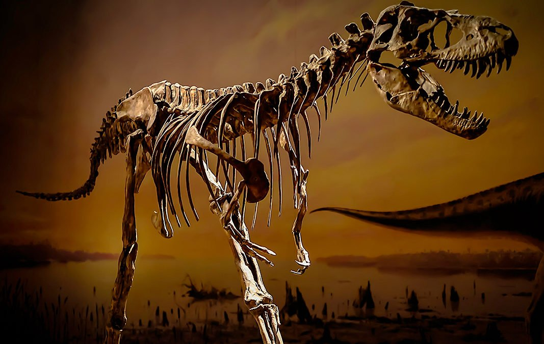 Dinosaur days out! Best Dinosaur Museums and Attractions