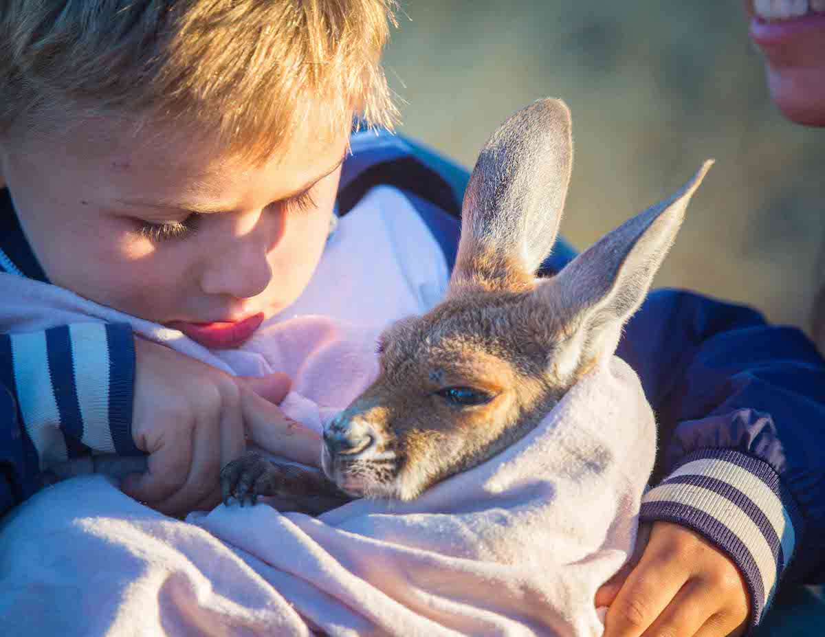 Australia bucket list kangaroo Alice Springs