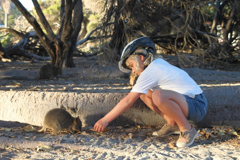 See the Quokkas on Rottnest Island